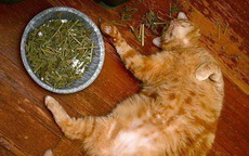 低调喵,别以为你装死,我就会给你换猫粮!