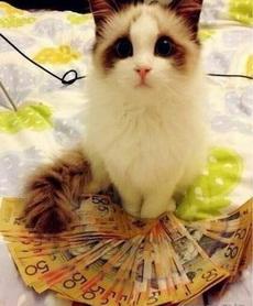 我不要钱,我要小鱼干