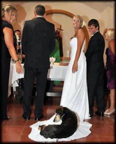 主人,你干嘛跟他结婚,你不爱我了吗