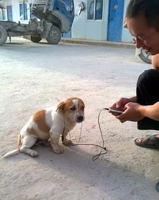 狗狗,周杰伦的歌曲,你听的懂吗?