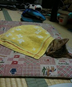 貓咪睡著了