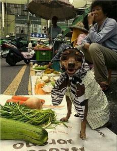 大婶青菜多少钱一斤