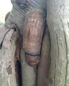 这棵树长得可真标致呀