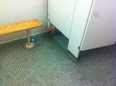 上厕所没有手机好比忘记带纸巾