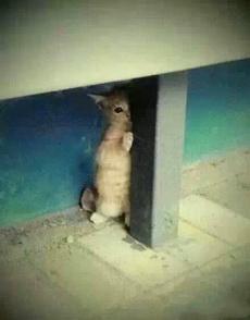 今天下班回来在路上看到的流浪猫,躲在柱子后面看人,心都要化了