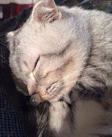 喵星人睡觉的时候,鼻子居然打出了个泡泡,跟漫画人物睡觉的样子一样。