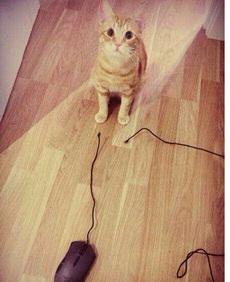 家里的猫终于会抓老鼠了,欣慰。