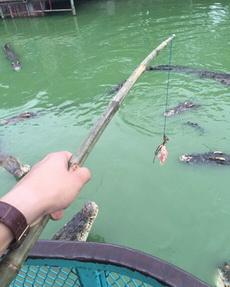 无聊钓钓鱼