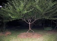 林子大了,什么奇葩的树都有啊!