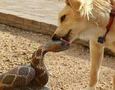 总感觉此刻蛇的内心是崩溃的