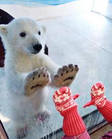 熊孩子和熊孩子