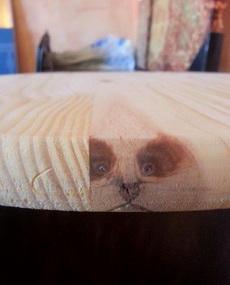 桌子下面的秘密,呃!