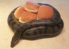 面包守护者!