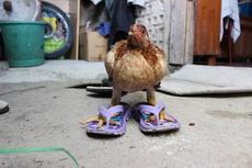 新买的拖鞋,靓不靓?