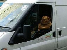 前面塞车都塞成狗了