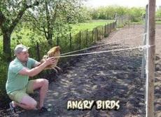 愤怒的小鸟!!!