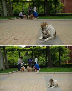 单身狗都好想有一个家,更别说一个人了