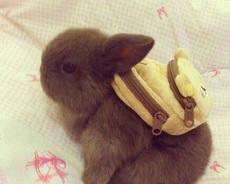 我要去上学了
