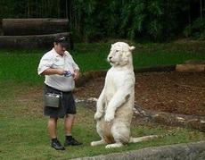 老虎不发威,就是病猫