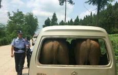 四川遂宁派出所民警在巡逻中发现,一辆银白色的面包车上竟然载了两头牛