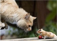 猫大哥,我来给你送草莓的。