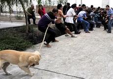 狗狗也来凑热闹
