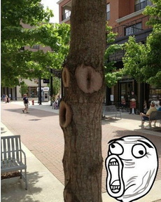 小心,这棵树要暴走了。