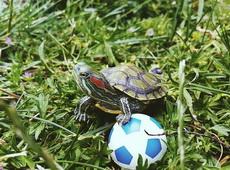 龟:我来自巴西,足球是我的强项!