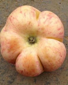 估计苹果和南瓜偷了情