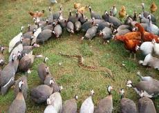蛇:妈,我今天不回来吃饭了