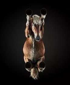 从下面看一匹马