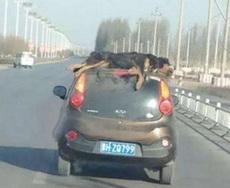 这遛狗方式,真是无人能比