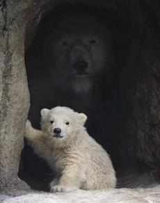 当你在凝视小熊的时候大熊也在凝视着你
