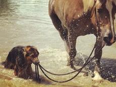 老子一天到晚在外面放马,我容易吗我。