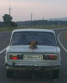 單身狗只配坐后備箱