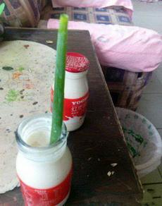 买酸奶忘记拿吸管了,只能拿大葱来代替了