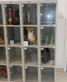 等着我去给你买狗粮