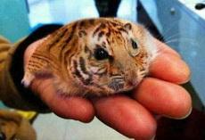 老虎,老鼠,傻傻的分不清楚。