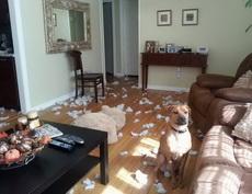 狗:我不是道谁干的