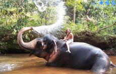 MM与大象淋浴