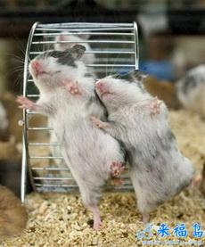 幸福的小老鼠
