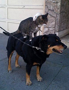 狗上有猫,猫上有鼠……