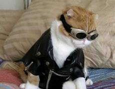 黑社会猫咪