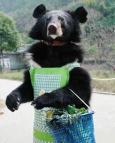 黑狗熊竟然上街买菜