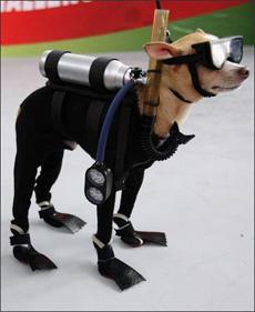 整装待发的潜水员