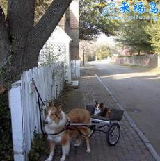 Tres ruedas de perro