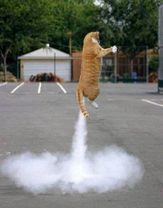 喷气式小猫