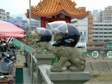 地球果真好危险!石狮都得带头盔