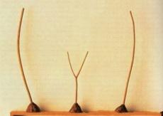 这只是,三根树枝,可是你看出了什么???