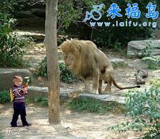 I Am Not Afraid of Lion